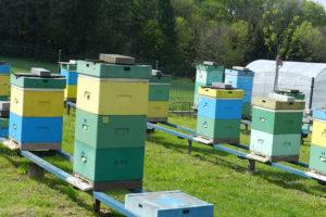 pszczelarze